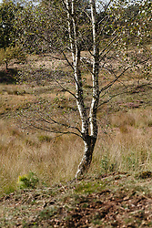De Elsberg, National Park Veluwezoom, Natuurmonumenten