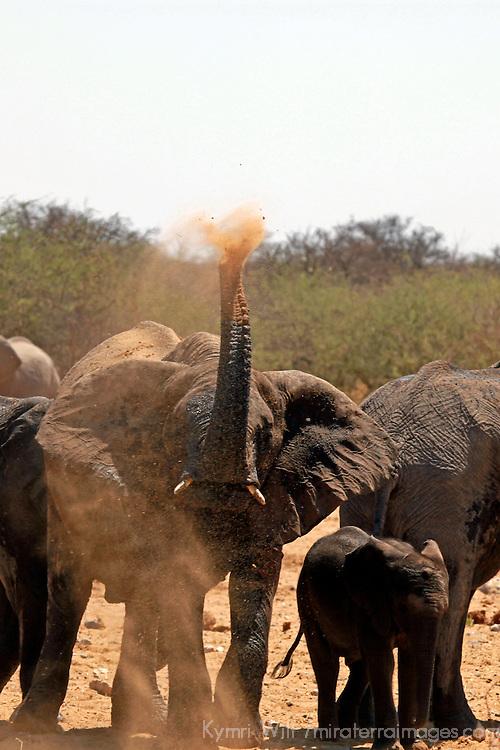 Africa, Namibia, Etosha. Elephant having dust bath at a water hole in Etosha National Park.