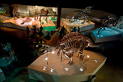 Stock photo of the aerial view of the dinosaurs at the new Paleontology Hall at the Houston Museum of Natural Science showing the Triceratops (Lane)