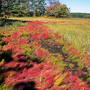 The Great Marsh is a 20,000 acre tidal wetland that extends from Cape Ann to the mouth of the Merrimack River.