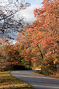 Country Road through forest landscape. Blue Ridge Mountains. Virginia. United States of America.