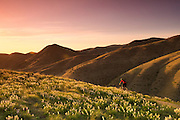 Mountain biker rides through the lupin in the Boise foothills. MR.