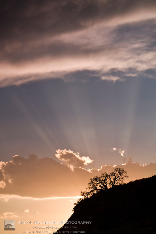 Crepuscular rays radiate across the sky at sunset above desert plants outside of Capitol Reef National Park, Utah