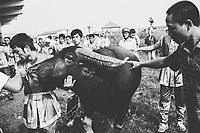A man leads his buffalo through a crowd of people at a festival in northern Vietnam.