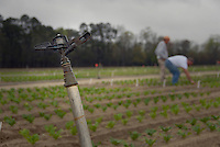 Sprinkler head in the field as two extension agents looks over research crops planted in Kinston. PHOTO BY ROGER WINSTEAD