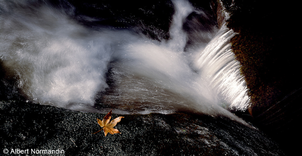 Flowing water in creek with fall leaf floating
