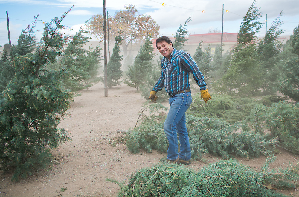 mkb121516b/metro/Marla Brose121516<br /> Larry Trujillo, owner of Mora Christmas Trees, braces himself as a gust of wind blows through the Christmas tree lot, near 4th and Osuna, Friday, Dec. 16, 2017. Only the head of the lot's small tumbleweed snowman was left after the windy morning. The lot carries trees, including white fir, douglas dir and other native New Mexico trees from the Mora area. &quot;The wind is shaking them clean,&quot; Trujillo said. (Marla Brose/Albuquerque Journal)