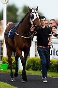 Scofflaw ridden by Rossa Ryan and trained by David Evans in the F45 Bath Group Training, Life Changing Handicap race.  - Ryan Hiscott/JMP - 06/05/2019 - PR - Bath Racecourse- Bath, England - Kids Takeover Day - Monday 6th April 2019