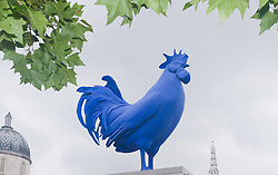 Katharina Fritsch's 'Hahn / Cock' unveiled on the Fourth Plinth.<br /> The German artist says her bright blue cock-a-doodle-doo is a comment on male posturing, but also symbolises regeneration, awakening and strength,<br /> Trafalgar Square,<br /> London, United Kingdom<br /> Thursday, 25th July 2013<br /> Picture by Piero Cruciatti / i-Images