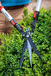 Three bladed Darlac shears trimming box hedge