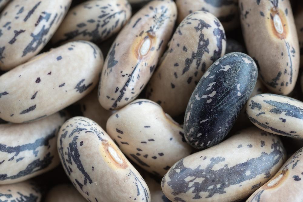 Dried Brighstone beans.