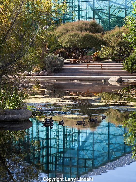 Sasebo Japanese Garden, Botanic Garden, ABQ BioPark, Albuquerque, New Mexcio, Route 66,