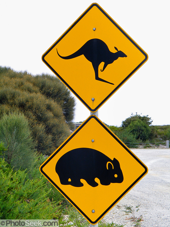 Kangaroo crossing and wombat crossing, orange highway signs, on Phillip Island, Victoria, Australia.