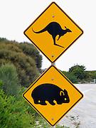Kangaroo crossing and wombat crossing, orange highway signs, on Phillip Island, Victoria, Australia.