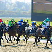 Lingfield 8th April