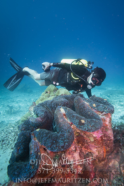 A scuba diver swims next to a Giant Clam in the Indonesian archipelago of Raja Ampat, part of the Coral Sea in Indonesia.