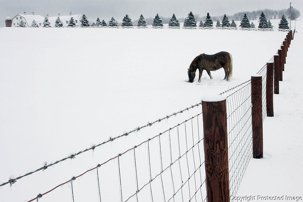 BEAUTY AFTER THE STORM - A pony digs a hole in the snow so he can graze after 7 inches of snow fell in central Iowa.  This farm was east of Des Moines.Des Moines, Ia.