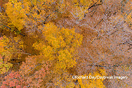 63876-02316 Aerial view of fall color trees Stephen A. Forbes State Park Marion Co. IL