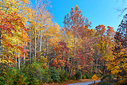 Fall foliage in early November at Stone Mountain State Park