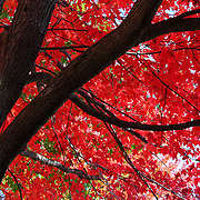 """Under the Reds""<br />