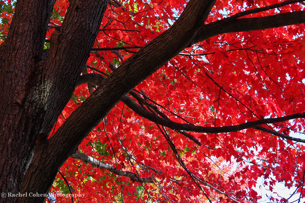 &quot;Under the Reds&quot;<br />