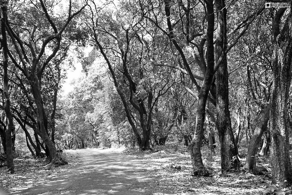 The path leading thruogh the Jungle, to a small village called Kumshet, located in Kalsubai Harishchandra National Park, India.