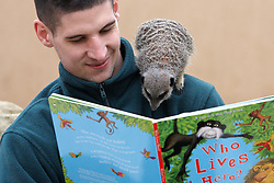 "© Licensed to London News Pictures.  09/02/2012. LONDON, UK. Keeper Nathan Coles (pictured) ""reads"" a book to inquisitive meerkats at ZSL London Zoo in Regents Park. The series of books, written by award winning authors with the help of keepers, are being launched today and form part of the Stories from the Zoo week which begins on Saturday (11 Feb). Photo credit :  Cliff Hide/LNP"