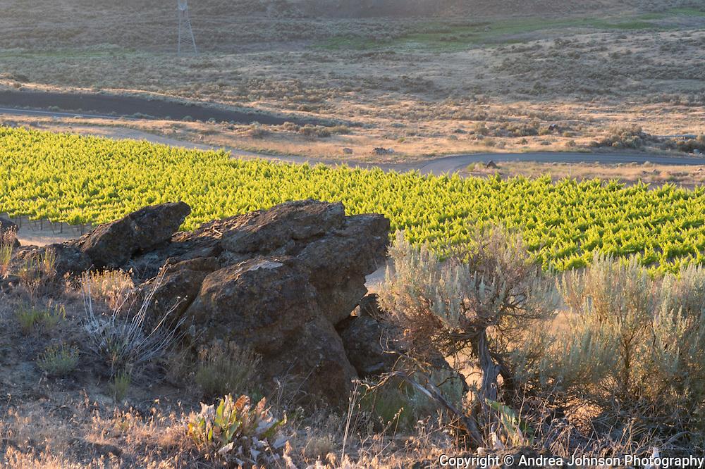 Spice Cabinet vineyard, Mercer Estates, Horse Heaven Hills, Washington