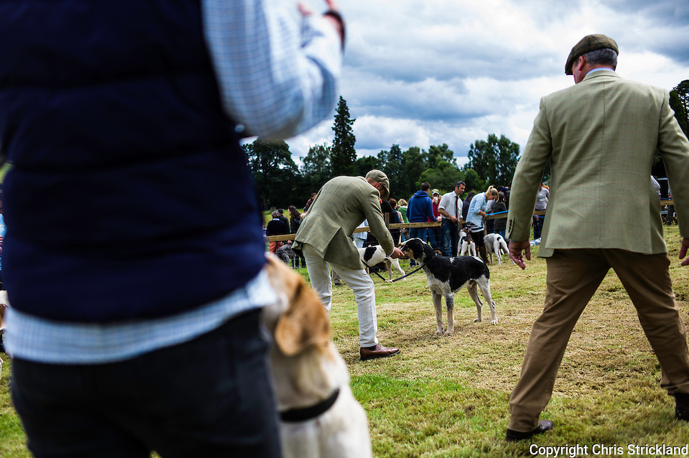 The Wells, Bedrule, Bonchester Bridge, Hawick, UK. 26th July 2015. Foxhounds from packs in Scotland and the North of England are judged at the Jedforest Hunt Hound, Terrier & Lurcher Show in the Borders.
