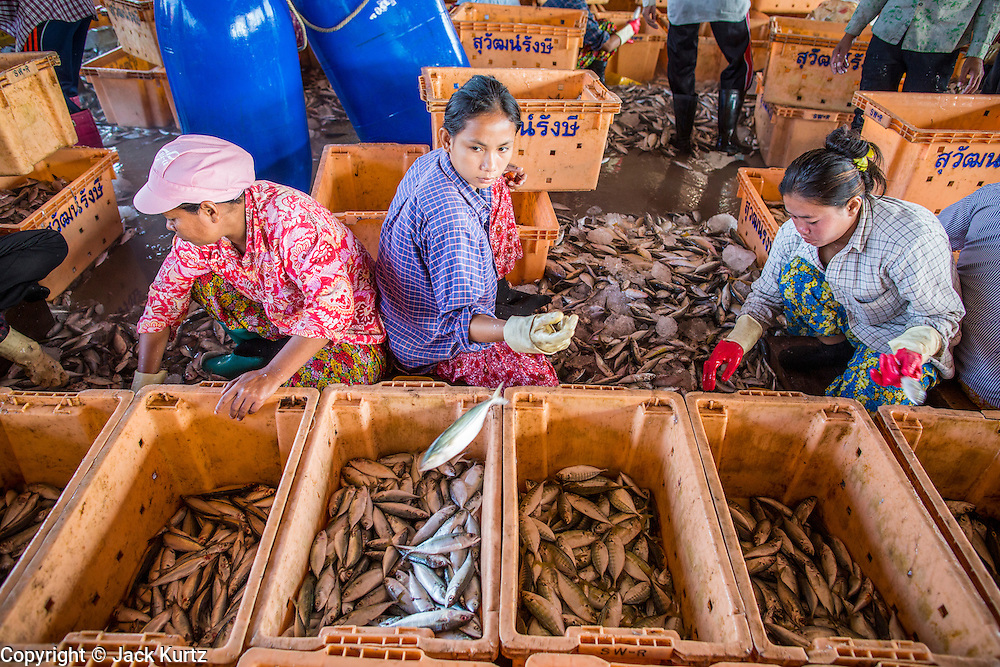 30 OCTOBER 2012 - PATTANI, PATTANI, THAILAND: Immigrant workers from Myanmar (Burma) and Cambodia sort and grade fish in the port of Pattani, province of Pattani, Thailand. Thailand's fishing industry relies on immigrant workers, mostly from Myanmar but also Laos and Cambodia. There have been allegations of worker abuse, including charges that workers are held in slave labor like conditions. There are hundreds of thousands of immigrant workers in the Thai fishing industry. Most are from Myanmar (Burma) but there are also Cambodian and Laotian workers in the industry.    PHOTO BY JACK KURTZ