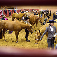 Lauren Wood | Buy at photos.djournal.com<br /> Competitors in the NY Showmanship category wait for their number to be called before walking their horse in front of the judges on Friday, March 10 during the annual MSU Bulldog Classic AQHA Horse Show at the MS Horse Park in Starkville.