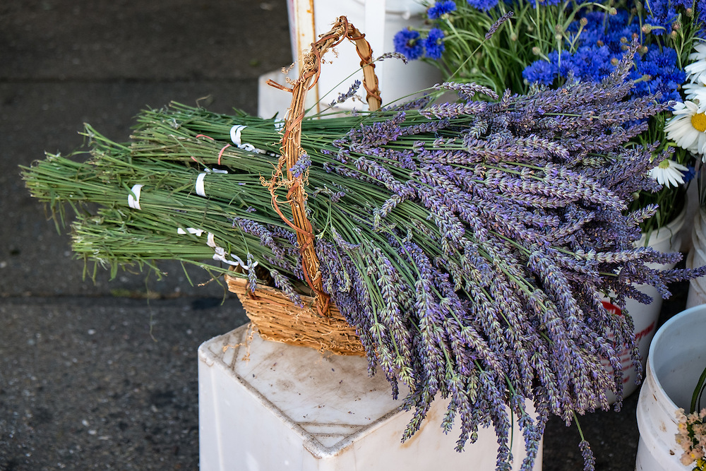 Lavender at the Farmers Market | June 30, 2013