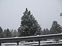 A conifer and guardrail stand out in contrast to unseasonable snowy weather along US 550 near the Continental Divide in NW New Mexico, USA  panorama