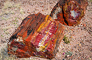 Petrified log sections, Petrified Forest National Park, Arizona USA