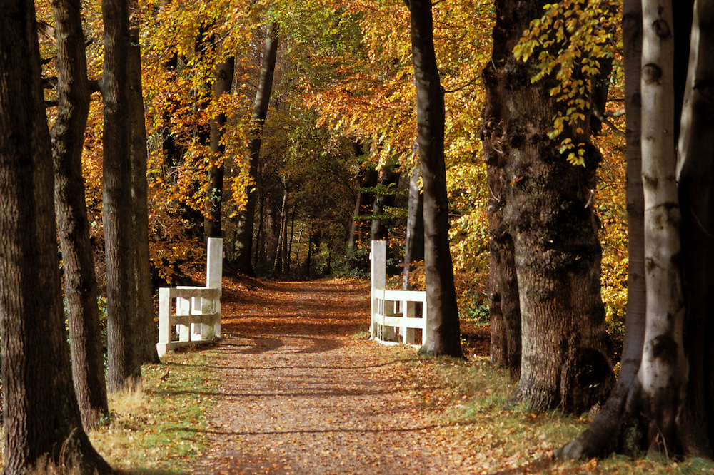 's-Graveland 's-Graveland, Wijdemeren Herfstblad, Autumn leave