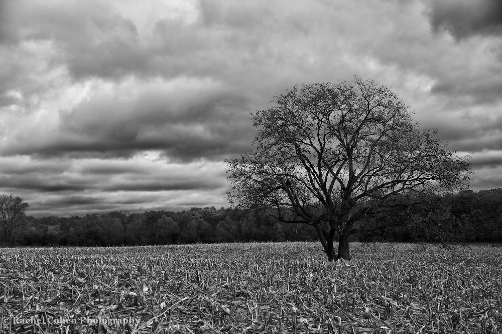 &quot;Autumnal Equinox&quot; B&amp;W<br />