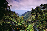 View from Kamakou Preserve rain forest, Molokai, Hawaii. USA.