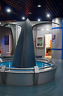 Whale tale on display at the Beijing Museum of Natural <br />     History