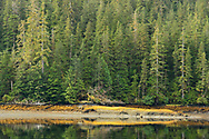 Conifer trees on the shore of Misty Fjords National monument are reflected in the calm waters of Rudyerd bay, Alaska.