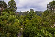 The dense rainforest of Sepilok with Sepilok Canopy Walkway, Sabah, Borneo.