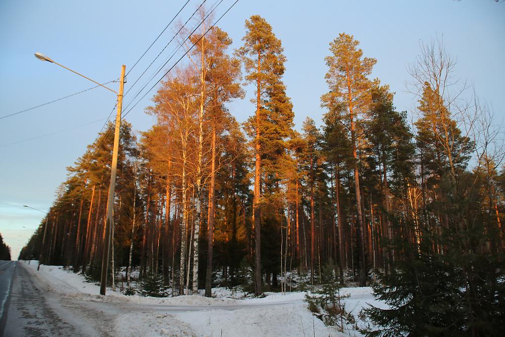 Route finlandaise au coucher du soleil
