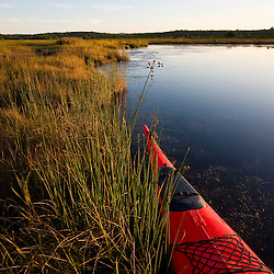 The bow of a kayak in a marshy area of Northeast Creek on Mount Desert Island near Bar Harbor, Maine.