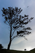 A couple, rendered in silhouette, walk past a wind-swept tree on a bluff overlooking the Pacific Ocean at Ecola State Park near Cannon Beach, Oregon.