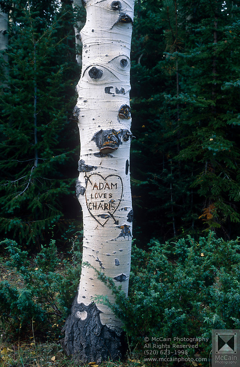 Heart carved on Aspen tree, near East Rim viewpoint, Kaibab Natl. Forest, Arizona..Subject photograph(s) are copyright Edward McCain. All rights are reserved except those specifically granted by Edward McCain in writing prior to publication...McCain Photography.211 S 4th Avenue.Tucson, AZ 85701-2103.(520) 623-1998.mobile: (520) 990-0999.fax: (520) 623-1190.http://www.mccainphoto.com.edward@mccainphoto.com