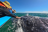 Touching a gray whale in Laguna San Ignacio in Baja California Sur, Mexico.