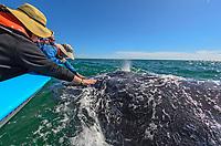 Touching a gray whale in Laguna San Ignacio in Baja California Sur, Mexico.