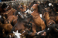 Since ancient times, already documented by the historian and geographer Strabon 2000 years ago, in the beginning of the summer, in the mountains of Galicia, Spain, locals collect and tame wild horses.<br /> The ritual consist of with screaming and waving forcing the small Galician horse to descend to the valley from the mountains that they walk free all the year. Then, these horses, in a small round curro (enclosed which retain the horses) are branded and the horsehairs are cut- rapa in Galician.<br /> After a chase and fight inside the &ldquo;curro&rdquo;, the &ldquo;agarradores&rdquo; control the beast making it possible to cut the hairs. <br /> Some of the horses are sold for the meat market and the rest is released to the wild, where the contact with humans is just going to happen in the following year.<br /> The most famous Rapa das Bestas is the one from Sabucedo, where around 700 horses are rounded in the curro and the festivities last for three days with thousands of visitors.<br /> This picture story is photographed in Sabucedo, Amil and in Canizadas.
