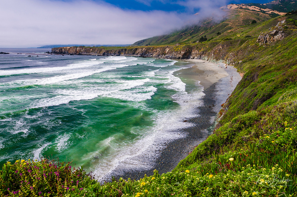 Wildflowers above Sand Dollar Beach, Los Padres National Forest, Big Sur, California USA