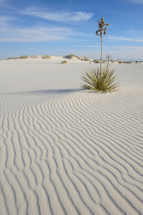 White Sands National Monument, New Mexico,,USA