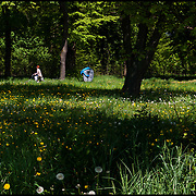 NATURA<br /> Photography by Aaron Sosa<br /> Poznan, Jastrowie - Polonia 2008<br /> (Copyright © Aaron Sosa)